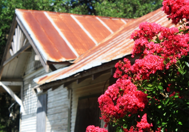 Blooms at the old homestead at the VanPelt Ranch in Con Can Texas