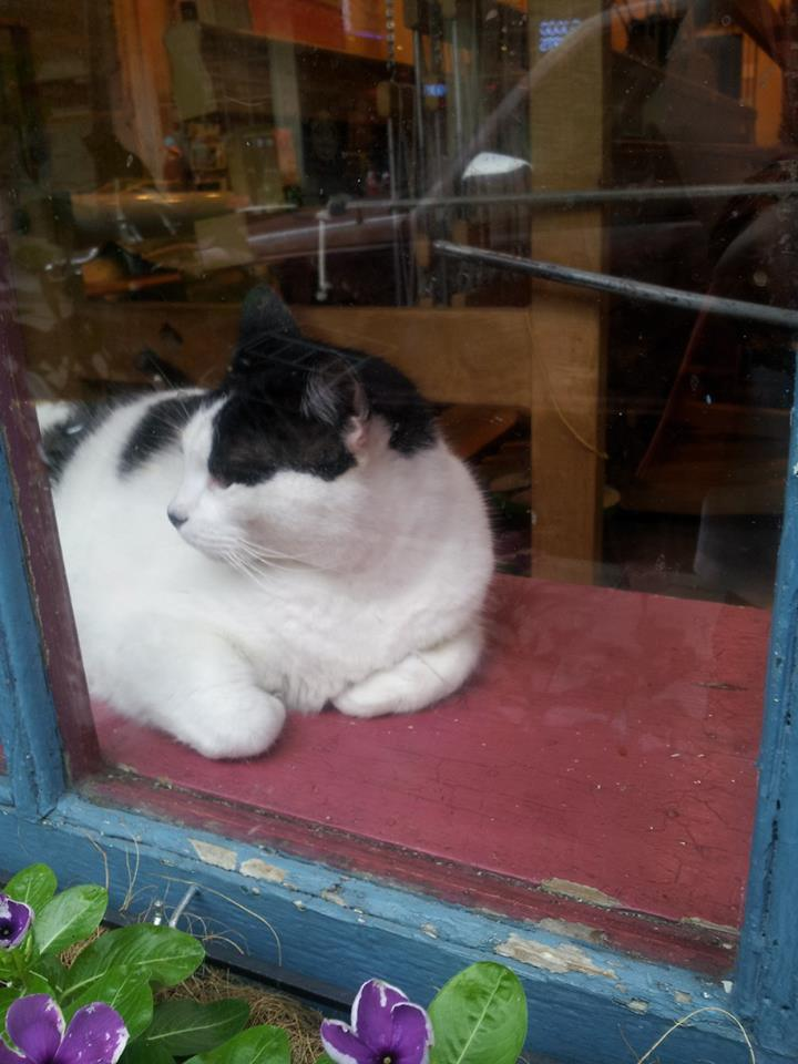 So many shops had a cat in the window. This one was watching over a weaving shop