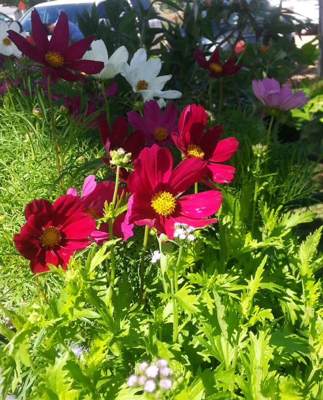 Local grown flowers you can take home and plant in your own flowerbeds.