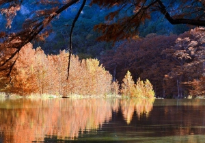 Fall foliage on the Frio River