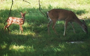 Spring time and the babies arrive in my back yard.