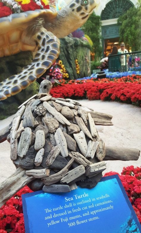 At the Bellagio in Las Vegas in the Conservatory & Botanical Gardens the baby  Sea Turtles  Photo by Jolene
