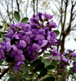 tree blooms 2 (2) - Copy